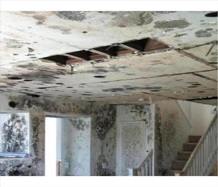 Severe Mold Cleanup in Blountville