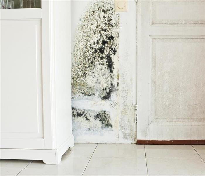 Mold Remediation Remediating Mold Damage in Your Bristol Home