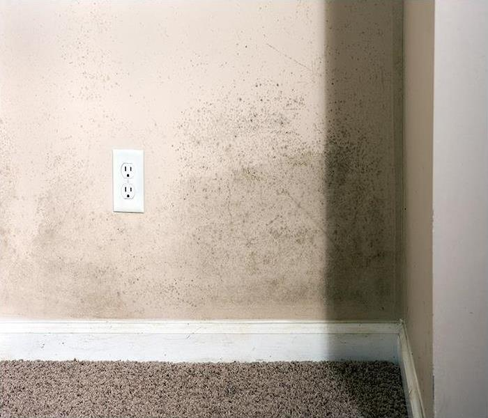 Mold Remediation Removing Mold Damage In Long Island
