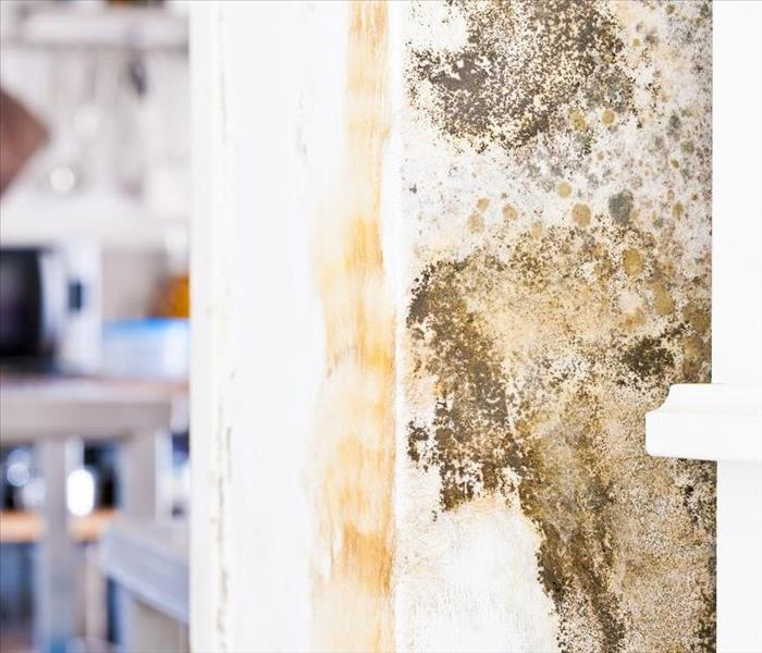 Mold Remediation Eliminating the Conditions that Can Lead to Mold Damage in Your Bloomingdale Home