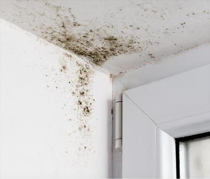 Mold Remediation The Right Call for Mold Damage in Your Colonial Heights Home