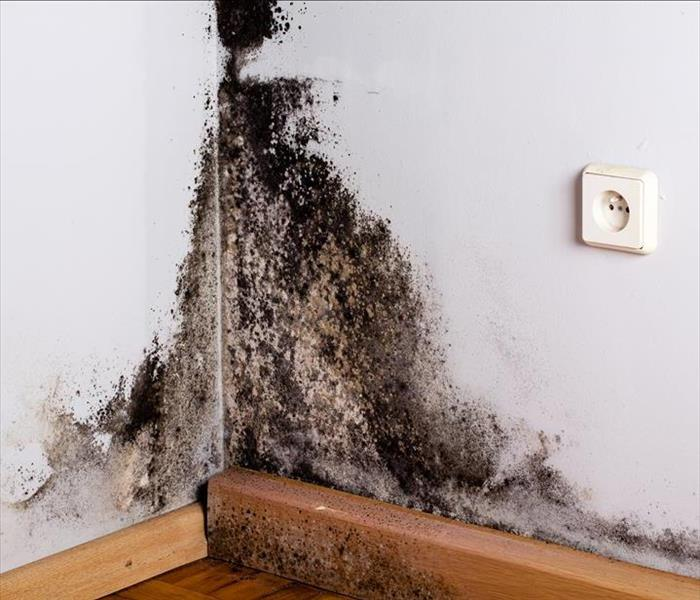 Mold Remediation Dealing With Mold Damage in Tennessee
