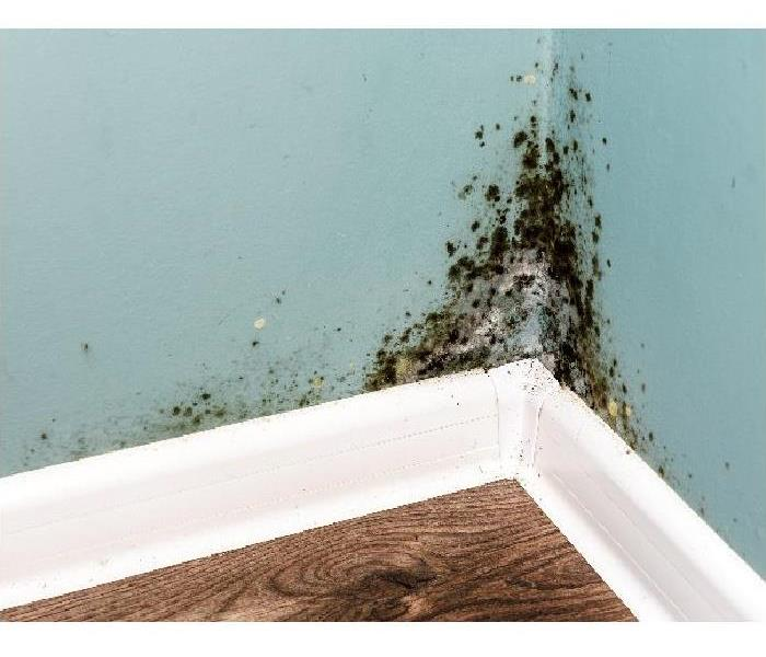 Mold Remediation Why Professional Mold Remediation is Necessary for Your Kingsport Home