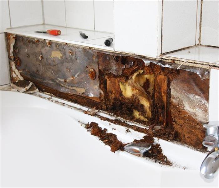 Black mold in bathroom