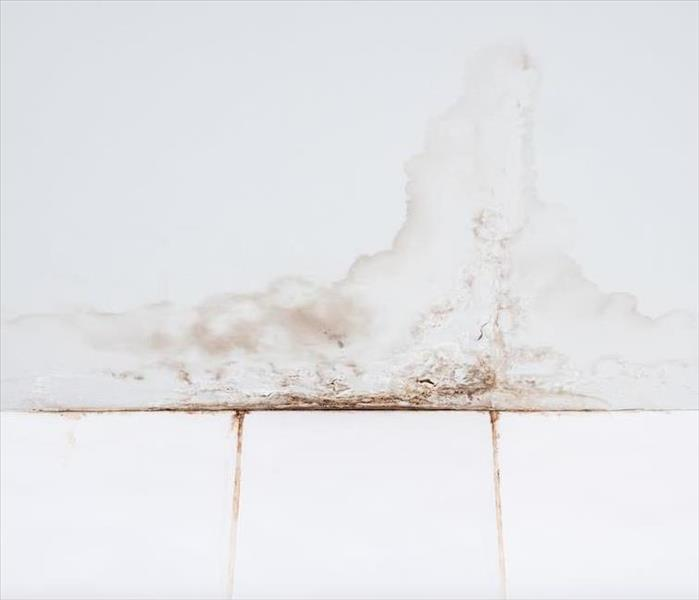 Mold Remediation Does Your Long Island Home Struggle With a Mold Situation?